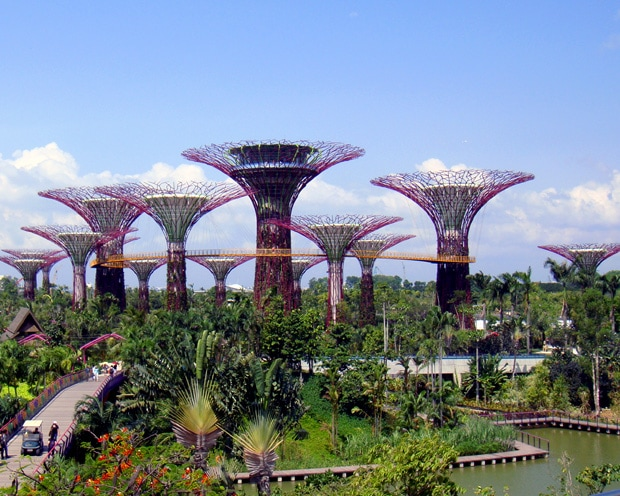 Supertree Grove Singapore Gardens by the Bay